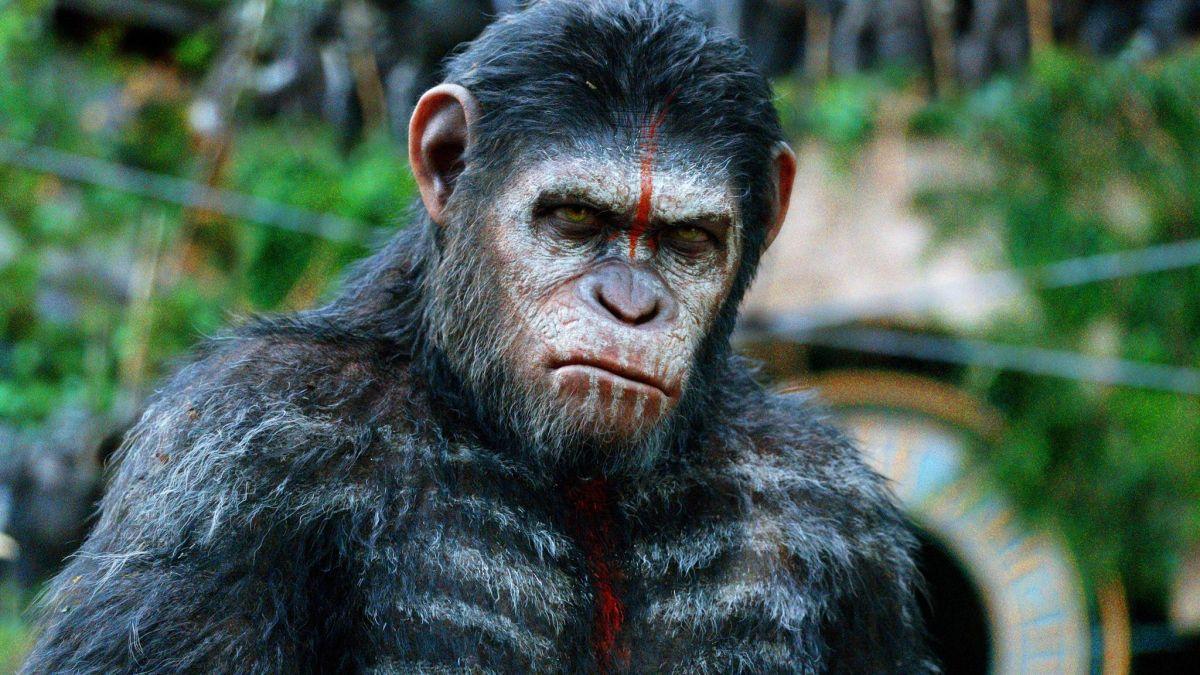 El amanecer del planeta de los simios: Guerra mundial César