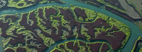 isla-minima-doñana